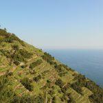 Les terrasses des Cinque Terre