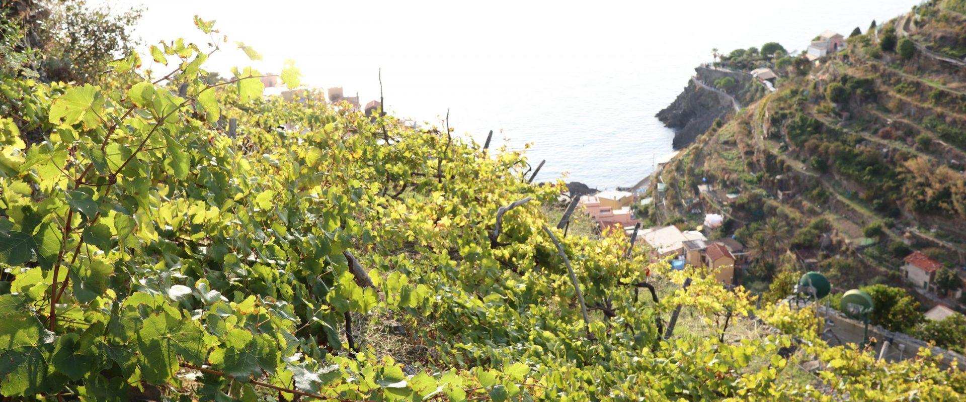 Trekking alle Cinque Terre